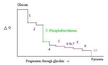 Phosphofructokinase pfk proteopedia life in 3d imagepaintimageg ccuart Image collections