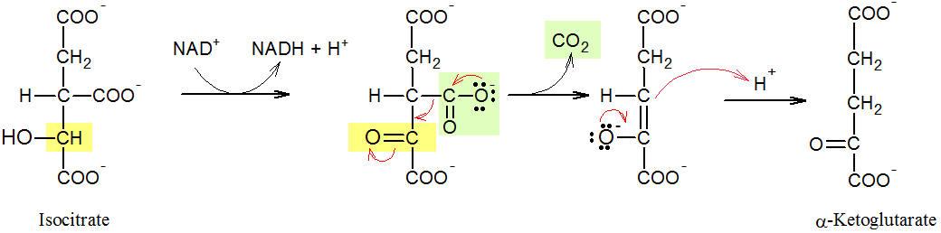 Krebs Cycle Step 3 Proteopedia Life In 3d