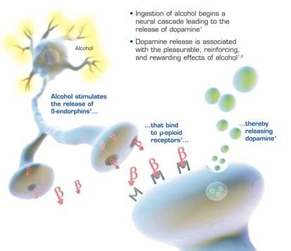 Cocaethylene Synthesis and Pathophysiology - Proteopedia