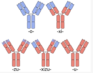 Different Types of Antibodies