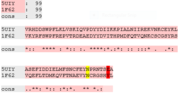 Fig.2:BAZ1A and BAZ1B both have a conserved asparagine anchor (in yellow) but BAZ1A has a glutamic acid gatekeeper residue instead of a valine gatekeeper residue in BAZ1B (in red), present in the binding pockets of several acetyl-lysine binding bromodomains. Sequence alignment was carried out using Tcoffee