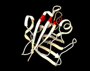 PDB 1T2W Active Site Reisdues Arg 197, Cys 184, and His 120 highlighted