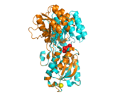 Figure 1 Superposition of open (orange, PDB ID 2fw0) and closed (cyan, PDB ID 2fvy) conformations of GGBP