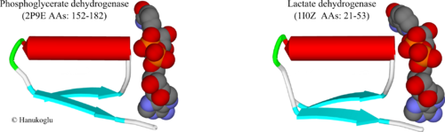 Fig. 3. NAD binding sites of 3-phosphoglycerate dehydrogenase (2p9e) (residues 152-182) and lactate dehydrogenase (1i0z). NAD is shown in CPK mode.