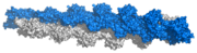 F-Actin polymer (based on Ken Holmes F-actin structure)