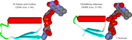 Fig. 2. The FAD binding sites of D-amino acid oxidase (2e48) (residues 1-36) and glutathione reductase (3grs) (residues 21-50). FAD is shown in CPK mode.