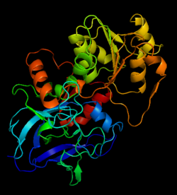 Structure of Alcohol Dehydrogenase