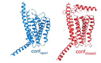 Figure 2: Open conformation in contrast to the closed conformation. The movement of the single helix over the top of the transmembrane domain is the most distinguishable characteristic between closed and open conformation. The jmolSetTarget('1');jmolLink(' script /wiki/extensions/Proteopedia/spt/wipeFullLoadButton.spt;  script /wiki/scripts/72/721535/Stalk/1.spt ','stalk','stalk'); is not accessible to glucagon in the closed conformation.
