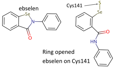 Chemical structures of ebselen and ring-open ebselen on Cys141 (drawn with Marvin, https://www.chemaxon.com).