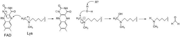 Figure 3: Hydride transfer mechanism of LSD-1 active site via FAD cofactor.