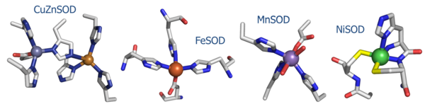 Fig. 1: Active site structures of the four known SOD's.