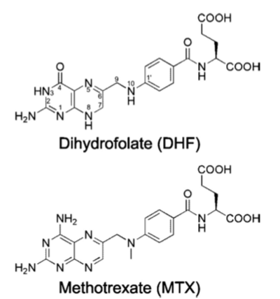 DHFR substrates