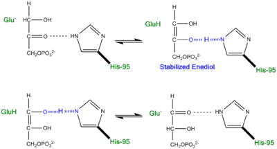 Proposed LBHB between Histidine and Enediol Intermediate.
