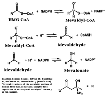 Chemical Reaction Catalyzed by HMGR