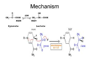 Catalytic function of LDH (1)