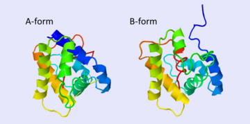The A and B forms without ligand (PDB IDs: 1gm0 and 1ls8).