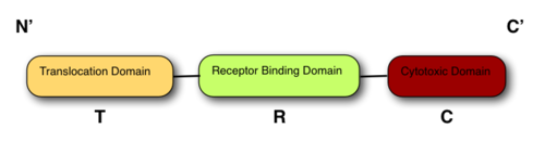 The 3 domain structure of all colicins