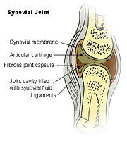 Figure 3. Synovial Joint